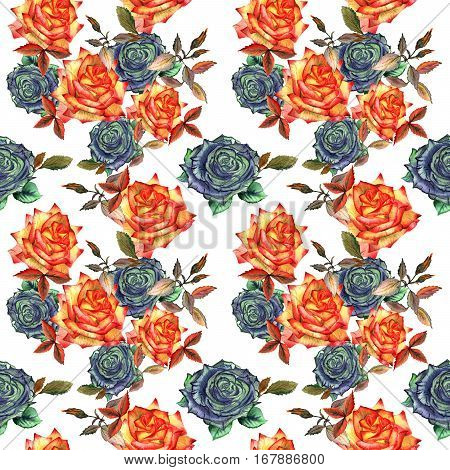 Wildflower rose flower pattern in a watercolor style isolated. Full name of the plant: rose, hulthemia, rosa. Aquarelle wild flower for background, texture, wrapper pattern, frame or border.