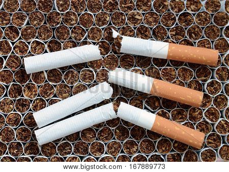 Close up broken a cigarettes against tobacco.