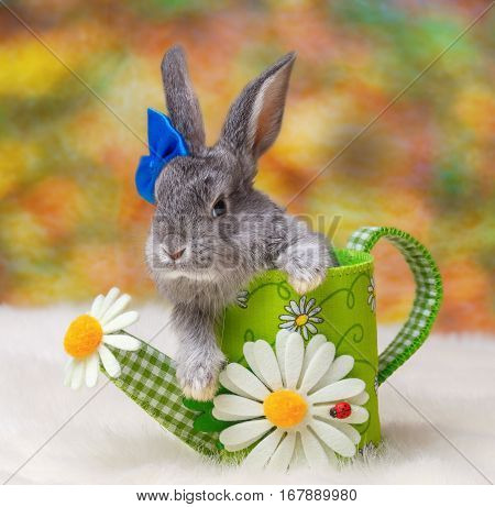 baby rabbit animal in hat furry rodent ears wool jumper