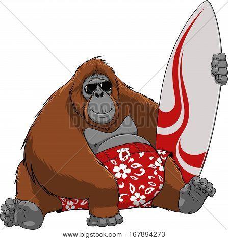 Vector illustration, of funny Orangutan surfer, on a white background