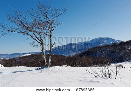 Winter Landscape with Snow and Trees. Snow Covered Hill Against Blue Sky.