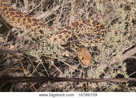 Snake in the bush