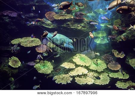 Coral garden with colorful tropical fish, underwater life