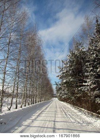 Russian Winter road with snow and trees spruce and Birch