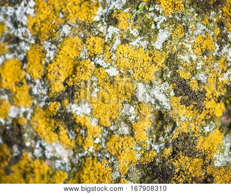 Stone surface with yellow lichen and rich texture.
