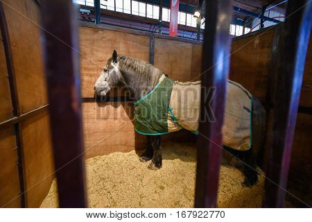 Buenos Aires, Argentina - Jul 18, 2016: Horse covered with a green blanket in a stable at the La Rural.