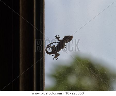 Silhouette of gecko that can be used as logo
