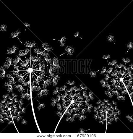 Beautiful nature black background with white dandelions and flying fluff. Floral trendy stylish wallpaper with summer or spring flowers. Modern backdrop. Vector illustration