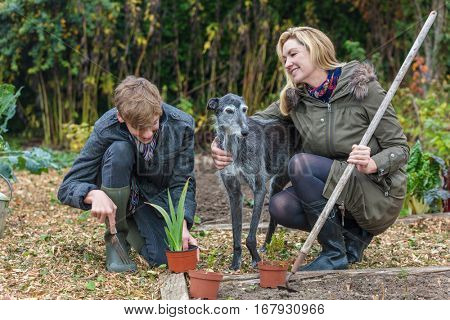 Happy smiling mother and teenage son, male boy child and woman gardening in a garden vegetable patch with their pet dog