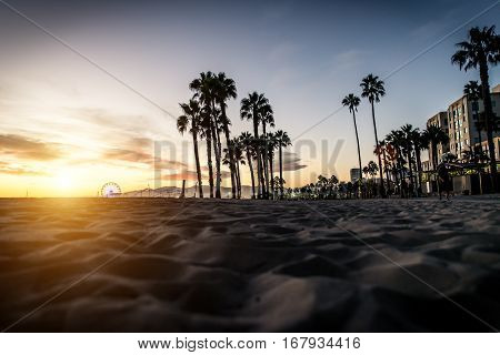 Palm trees silhouettes and Santa monica walkway