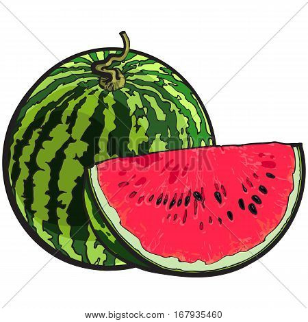Whole striped watermelon with curled up tail and red slice with black seeds, sketch style vector illustration isolated on white background. Realistic hand drawing of whole and cut ripe watermelon