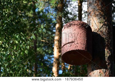 Bat house / Box for bats made of wood concrete, suspended on tree in forest.