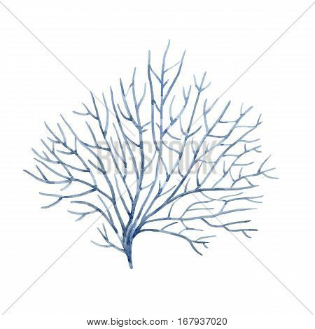 Beautiful vector isolated hand drawn watercolor underwater corals