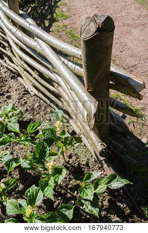 A Makeshift Fence Of Twigs And Sticks