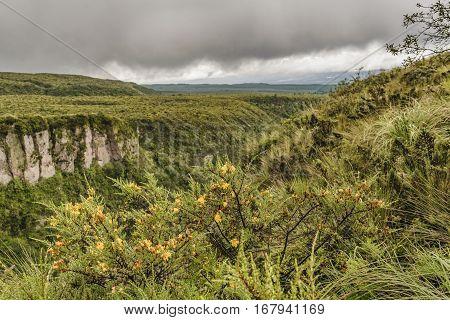 Cotopaxi National Park Landscape Scene