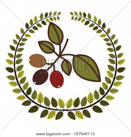 crown of leaves with coffee tree branch vector illustration