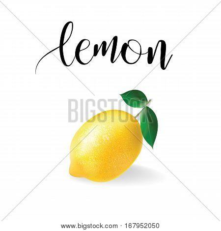 Lemon realistic vector. Citrus yellow fruit art