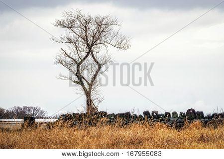 Jeju Stone Park Lone Tree Grassland
