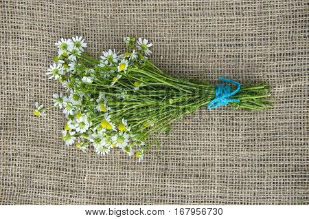 one fresh medical chamomile flower bunch on linen cloth
