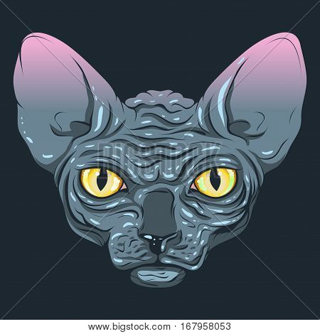 Vector cat. The cat without fur, hairless, sphinx with a dark gray color, yellow eyes on a dark background.