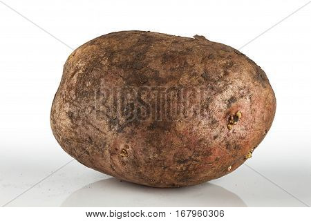 dirty unwashed potato on a light background