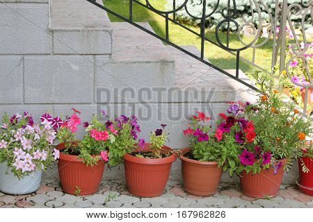 Shady corner of the garden with containers filled with colorful flowers next to the stairs