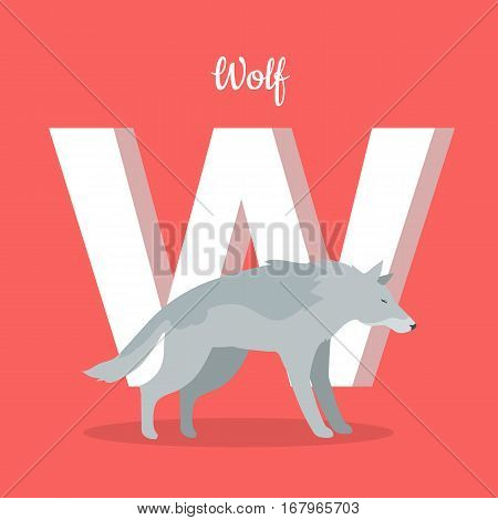 Animals alphabet. Letter - W. Gray wolf stands near letter. Alphabet learning chart with animal illustration for letter and animal name. Vector zoo alphabet with cartoon animal on red background