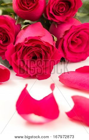 Closeup Of Red Roses Bouquet And Petals, On White Background.