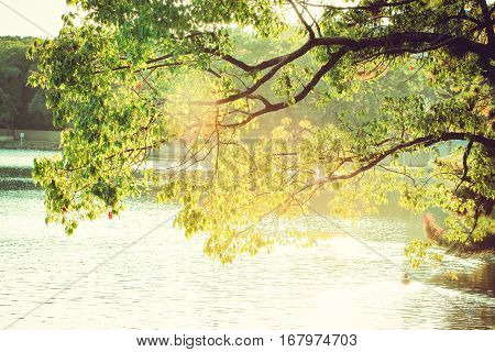 tree jutting out into the pond with the sunlight at Fukuoka Ohori Park Japan
