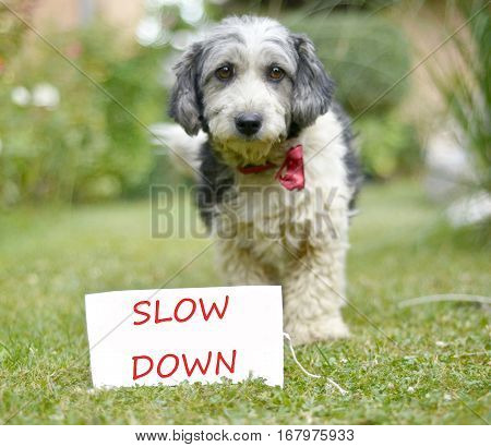 The cute black and white adopted dog and paper with text slow down