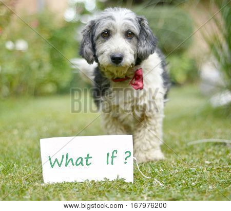 The cute black and white adopted dog and paper with text what if