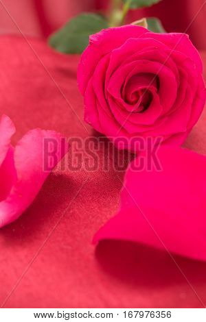 Closeup Of Red Rose And Petals, On Red Fabric Background.