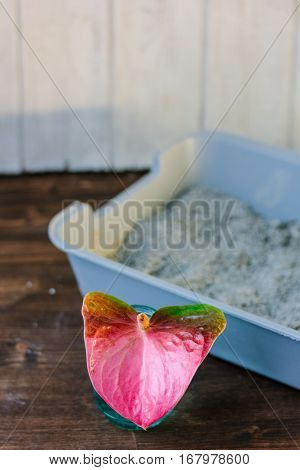 Litter Box Filled With Litter Sand With The Anthurium - Nice Smell Concept.