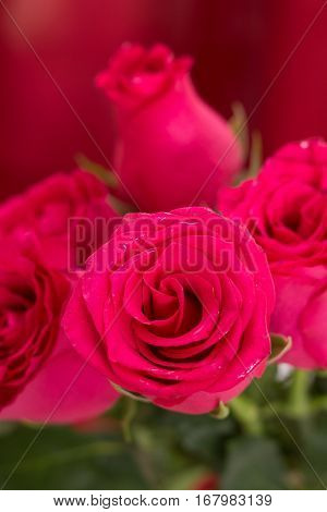 Closeup Of Wet Red Roses Bouquet, With Red Fabric Blurred Background.