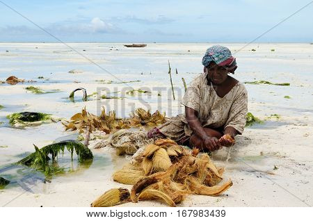 PAJE TANZANIA - APRIL 12: Ethnic woman making the ship's rope from shells of the spoiled coconut on Zanzibaru beaches in the Paje town on April 12 2013 Ethnic women on the beautiful beach on the Zanzibar island Tanzania Africa