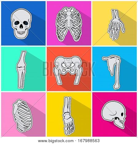 Skeleton icons set. Types of human bones on bright background. White bones, skull, breastbone, pelvis, fingers, radius bone. Anatomy skeleton. Bone structure. Flat design Vector illustration