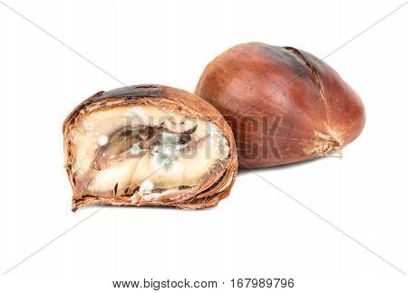 Spoiled Edible Chestnut