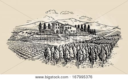 Farm sketch. Rural landscape, vineyard Vector illustration
