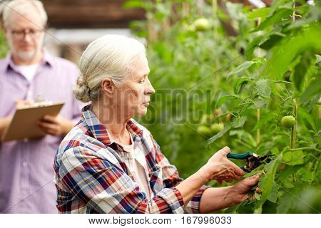 farming, gardening, agriculture and people concept - senior woman with garden pruner working at farm greenhouse