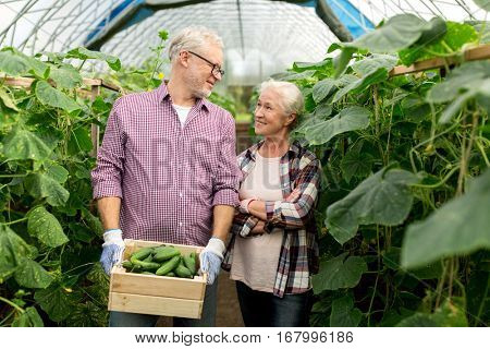 farming, gardening, agriculture, harvesting and people concept - senior couple with box of cucumbers at farm greenhouse