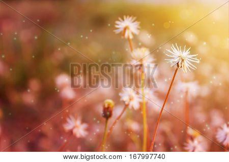 Dreamy romantic background of grass flowers in pink and lens flare
