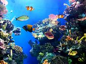 Colorful aquarium showing different colorful fishes swimming poster