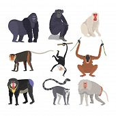 Different types of monkeys rare animal vector set. Cartoon macaque nature primate character. Wild zoo ape chimpanzee. Wildlife jungle animal, poster