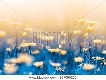 Yellow Forest Flowers On A Background Of Blue Leaves And Stems. Artistic Natural Macro Image.  Wild
