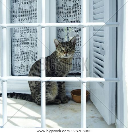 cat behind window bars