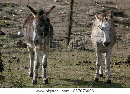 Friendly Donkeys At A Ranch In Durango, Co