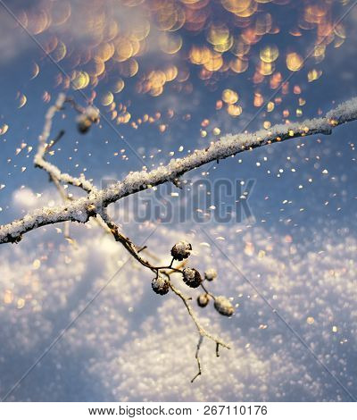 Frozen Tree Branch Twig With Colourful Flakes Snowfall Season Concept