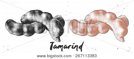 Vector Engraved Style Illustration For Posters, Decoration And Print. Hand Drawn Sketch Of Tamarind