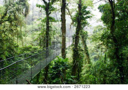 Cloud Forest In Monte Verde, Costa Rica