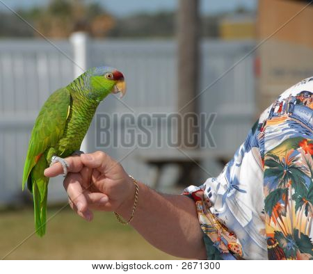 man with his pet parrot in Florida. poster